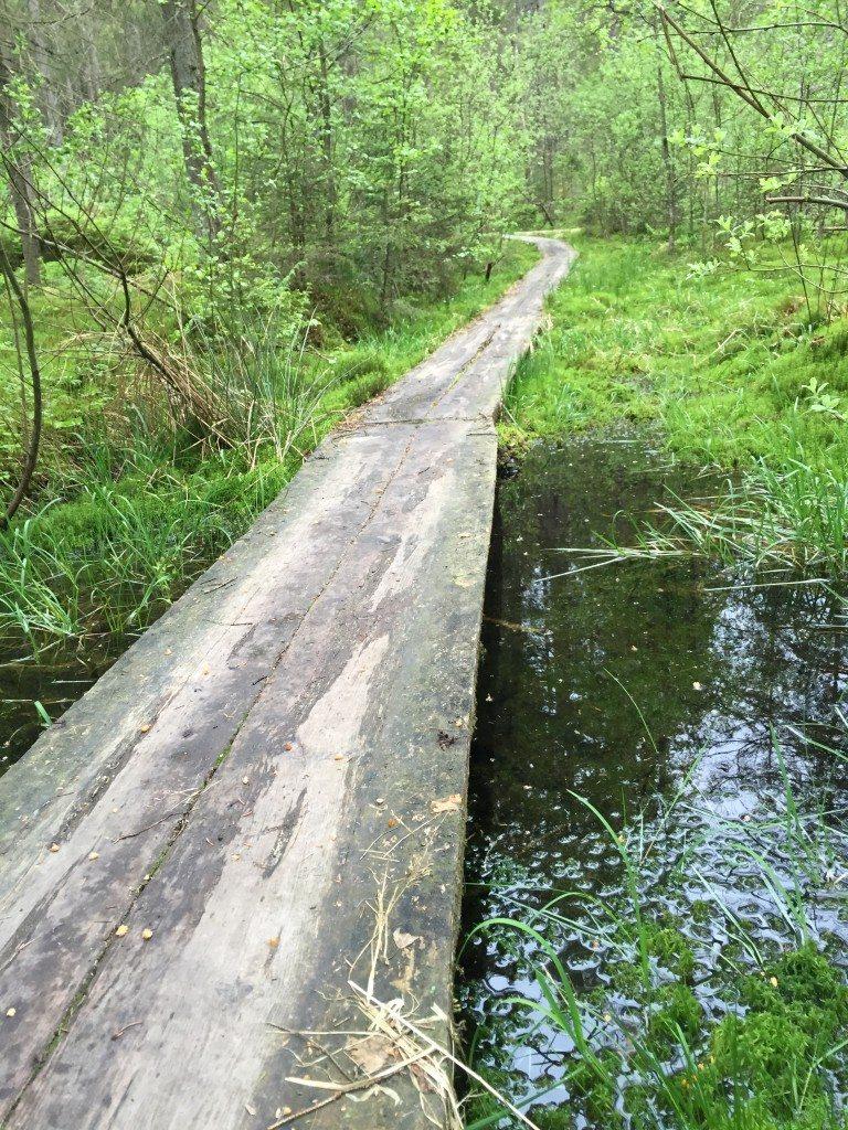 Boras swimrun путь в лесу